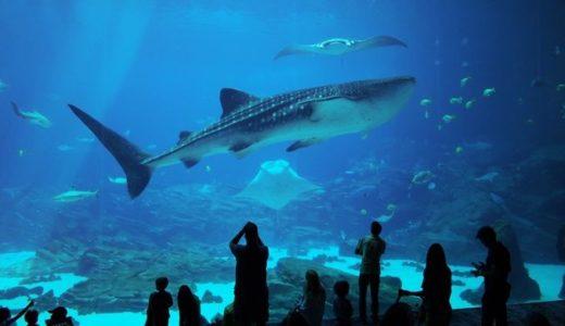 ジンベエザメがいる水族館は?日本ではココで会える!