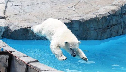 ホッキョクグマがいる水族館や動物園はコチラ!