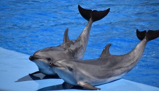 イルカのショーを水族館に見に行こう!